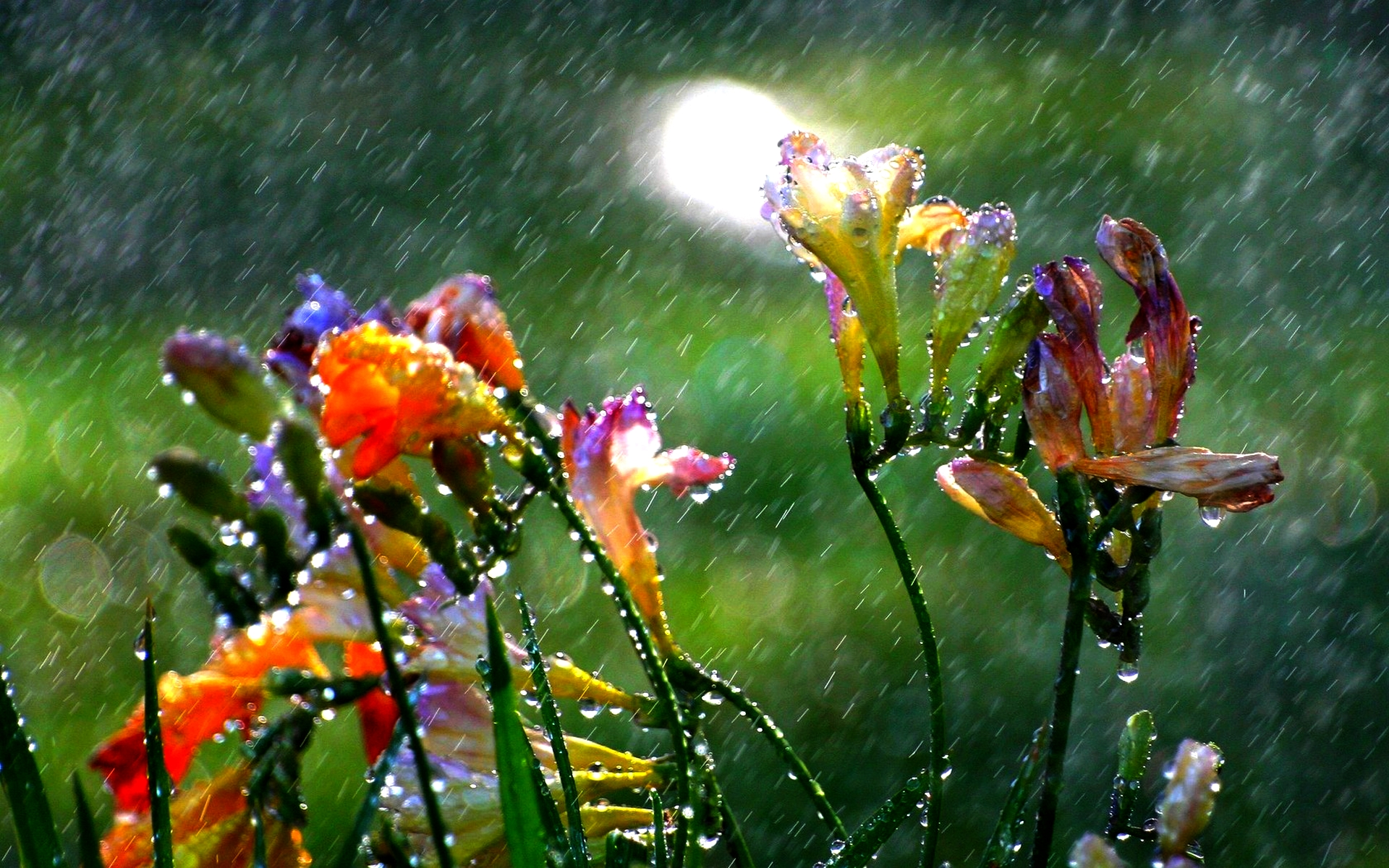 rain summers